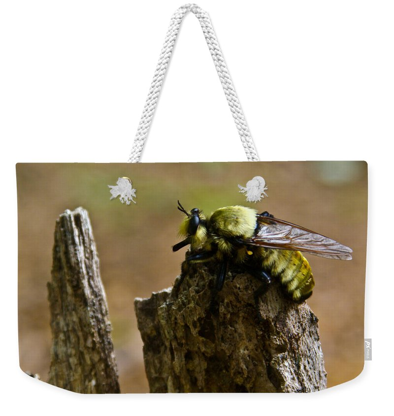 Fly Weekender Tote Bag featuring the photograph Mrs. Fly by Douglas Barnett