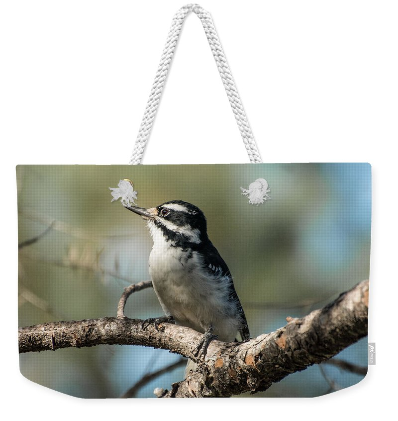 Bird Weekender Tote Bag featuring the photograph Mrs. Hairy by Constance Puttkemery