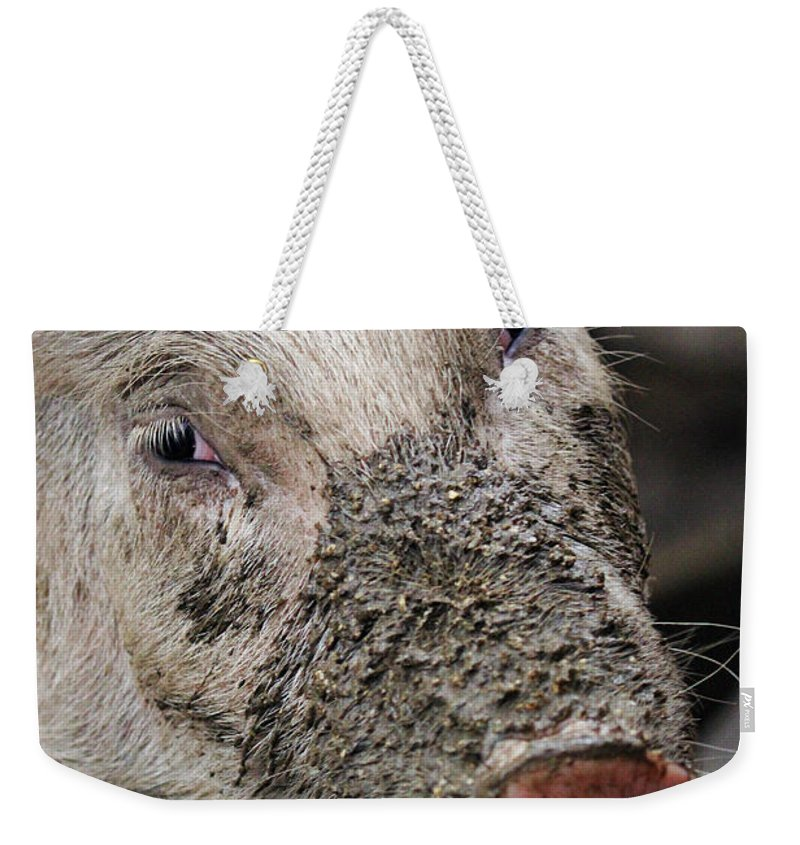 Pig Weekender Tote Bag featuring the photograph Mud Face by Jennifer Robin