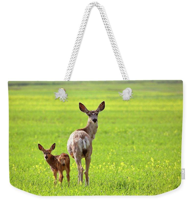 Mule Deer Weekender Tote Bag featuring the digital art Mule Deer Doe And Fawn Looking Back Over Their Shoulders by Mark Duffy