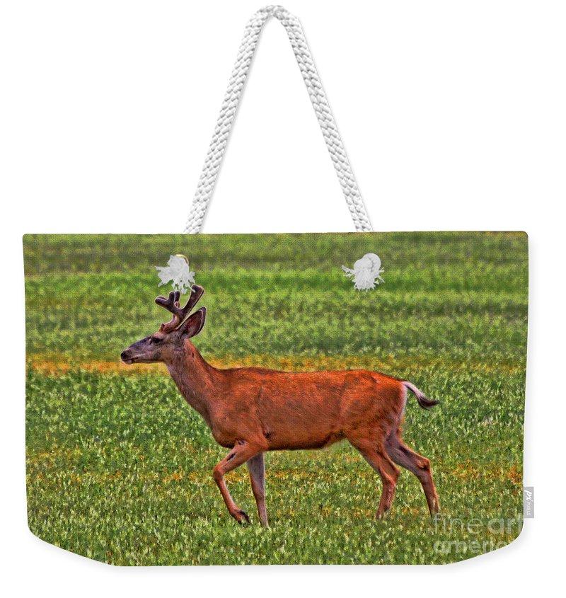 Deer Weekender Tote Bag featuring the photograph Mule Deer On The Sante Fe Trail by Tommy Anderson
