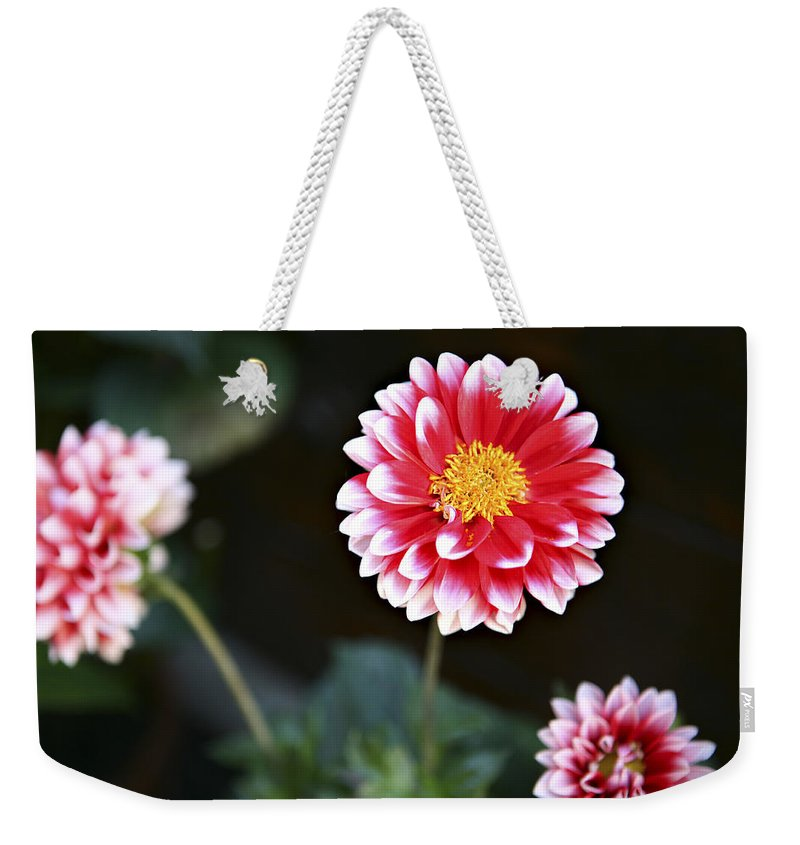 Three Weekender Tote Bag featuring the photograph Mums by Marilyn Hunt
