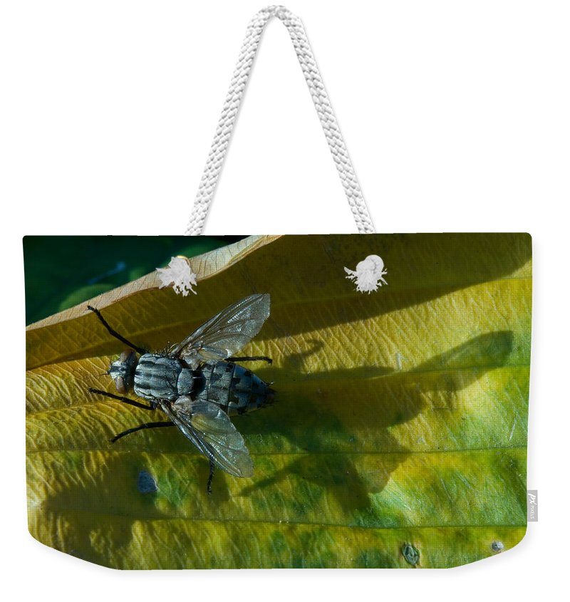 Fly Weekender Tote Bag featuring the photograph Musca On Display by Douglas Barnett