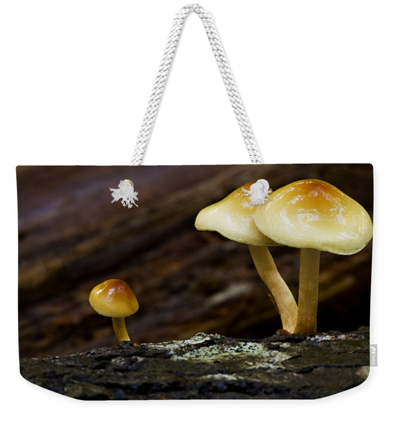Mushrooms Weekender Tote Bag featuring the photograph Mushroom Trio by Bob Christopher