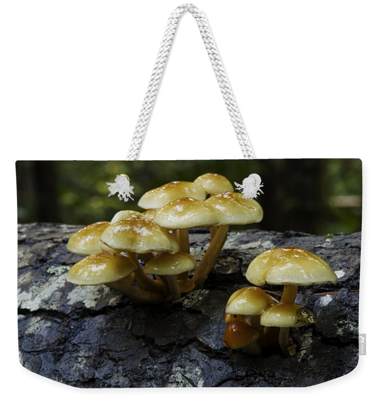 British Columbia Weekender Tote Bag featuring the photograph Mushrooms by Bob Christopher