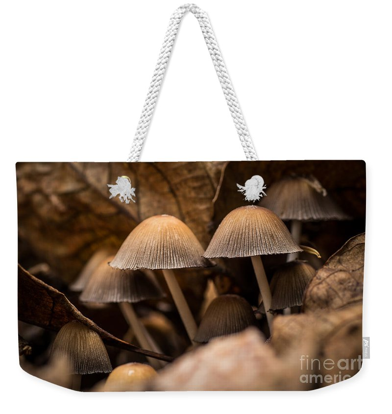 Autumn Weekender Tote Bag featuring the photograph Mushrooms Hidden Between The Leaves by Brothers Beerens