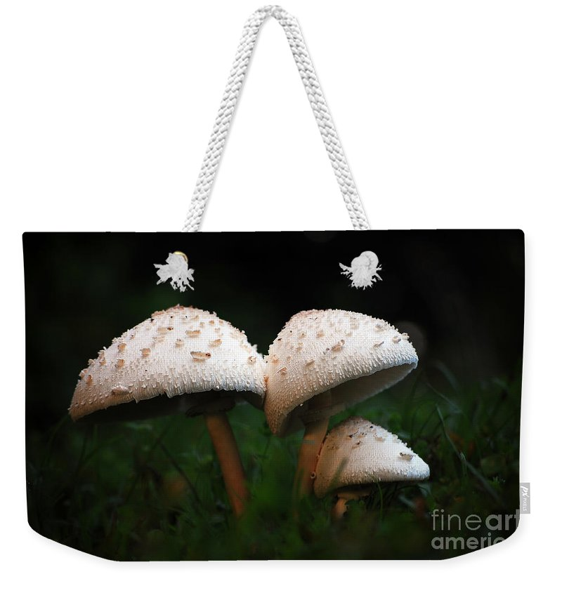Mushrooms Weekender Tote Bag featuring the photograph Mushrooms In The Morning by Robert Meanor