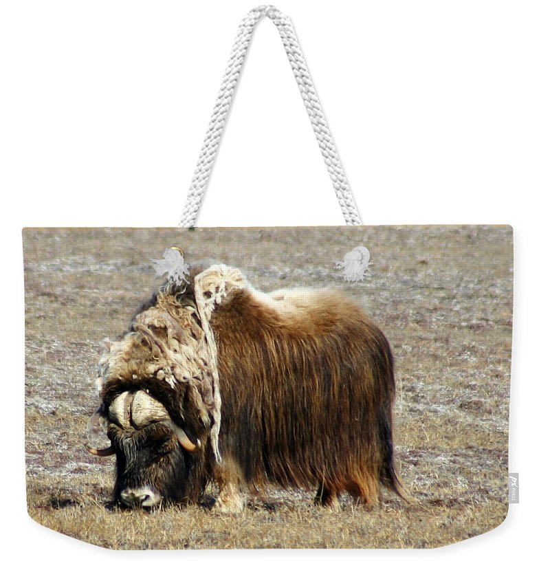 Musk Ox Weekender Tote Bag featuring the photograph Musk Ox by Anthony Jones