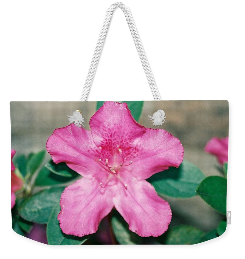 Pink Flower Azalea Weekender Tote Bag featuring the photograph My Azalea by Cindy New