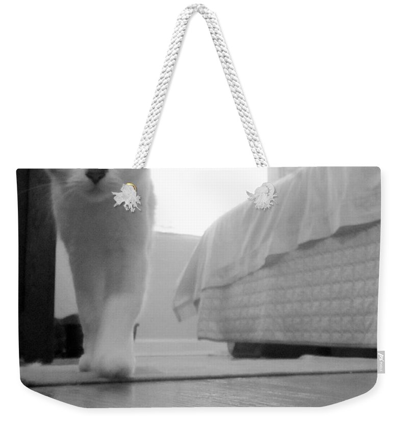 Kitty Weekender Tote Bag featuring the photograph My Brothers Keeper by Pattie Frost