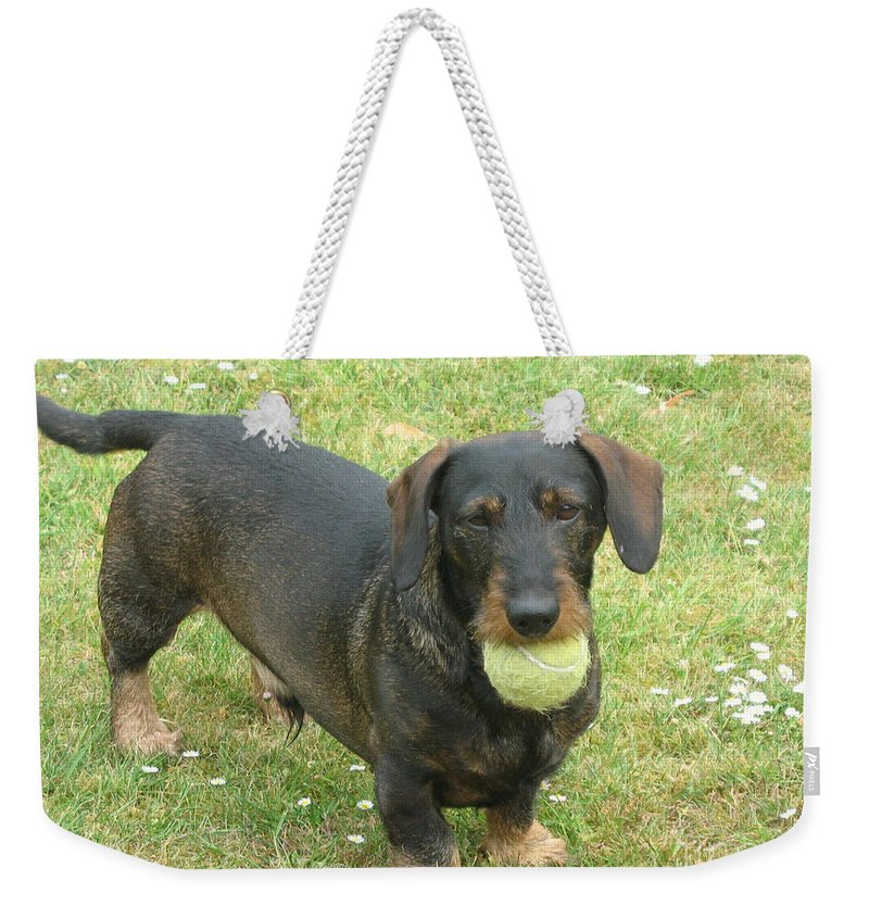 Dog Weekender Tote Bag featuring the photograph My Favored Toy by Christiane Schulze Art And Photography