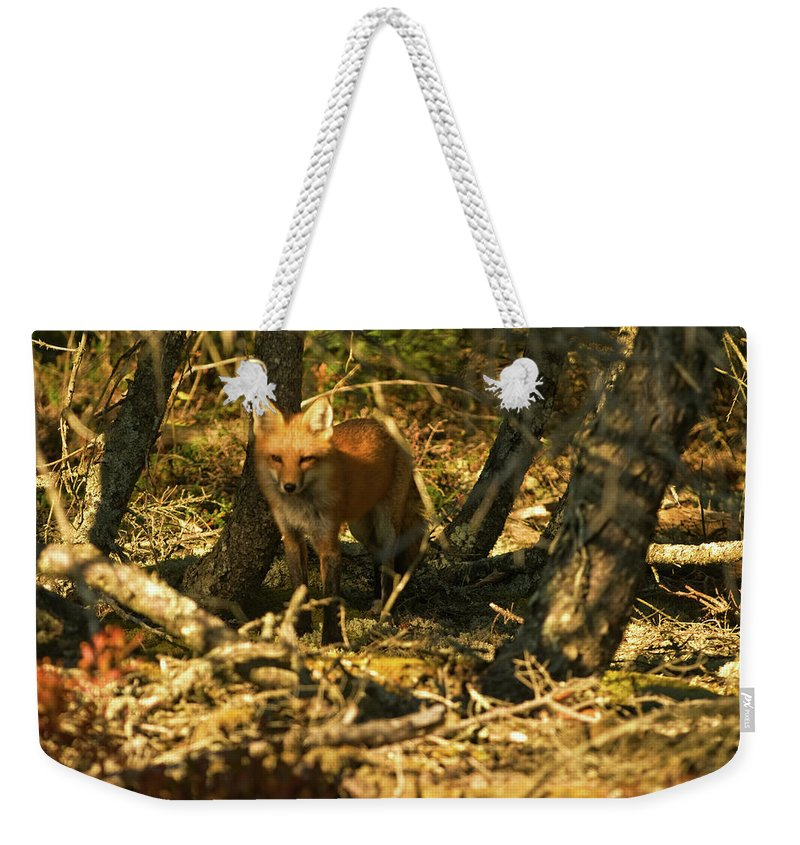 red Fox Weekender Tote Bag featuring the photograph My Friend Red by Paul Mangold