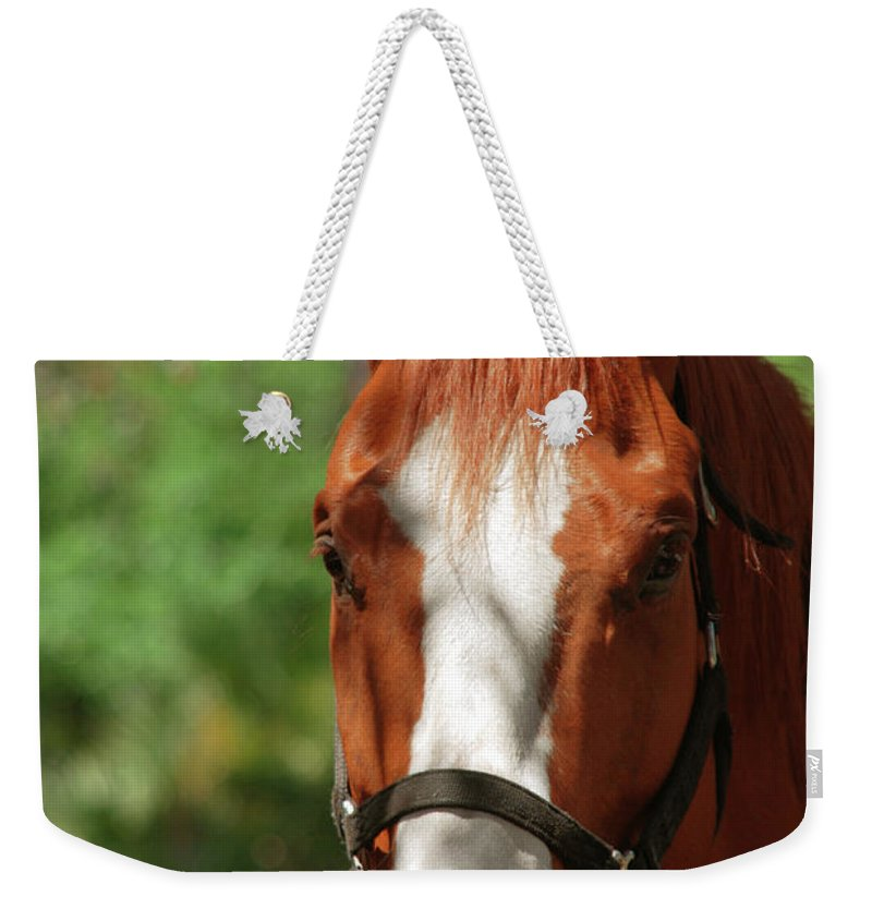 Horse Weekender Tote Bag featuring the photograph My New Friend by Susanne Van Hulst