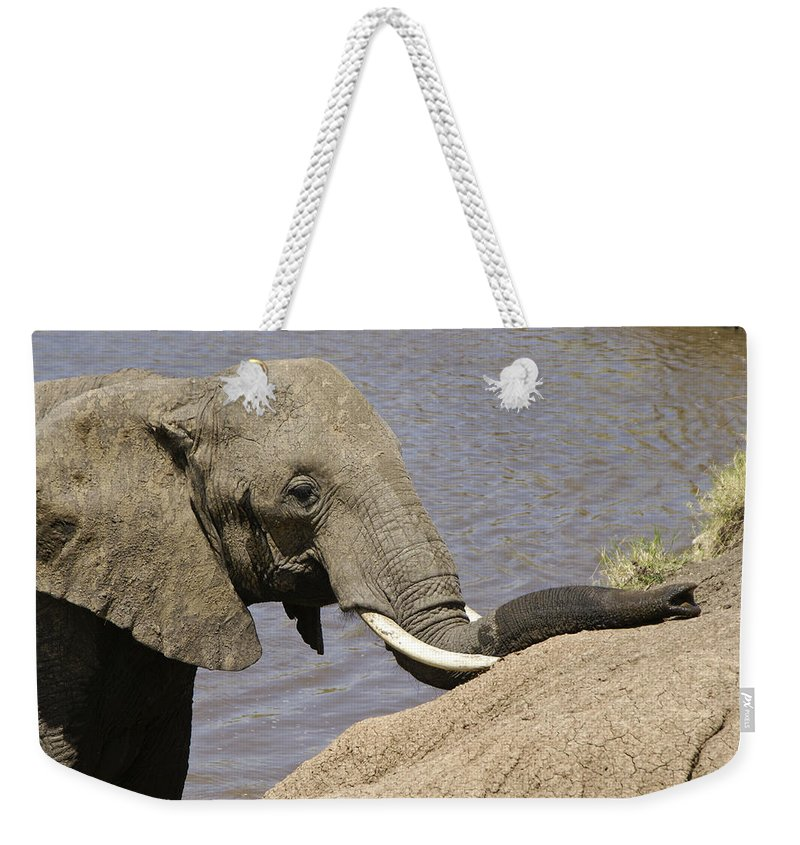 Africa Weekender Tote Bag featuring the photograph My Trunk Needs Drying Out by Michele Burgess