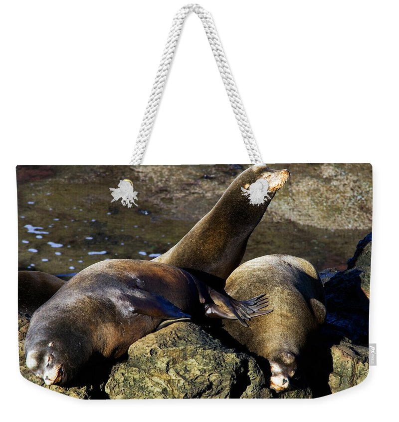 Sea Lion Weekender Tote Bag featuring the photograph Nap Time by Randall Ingalls