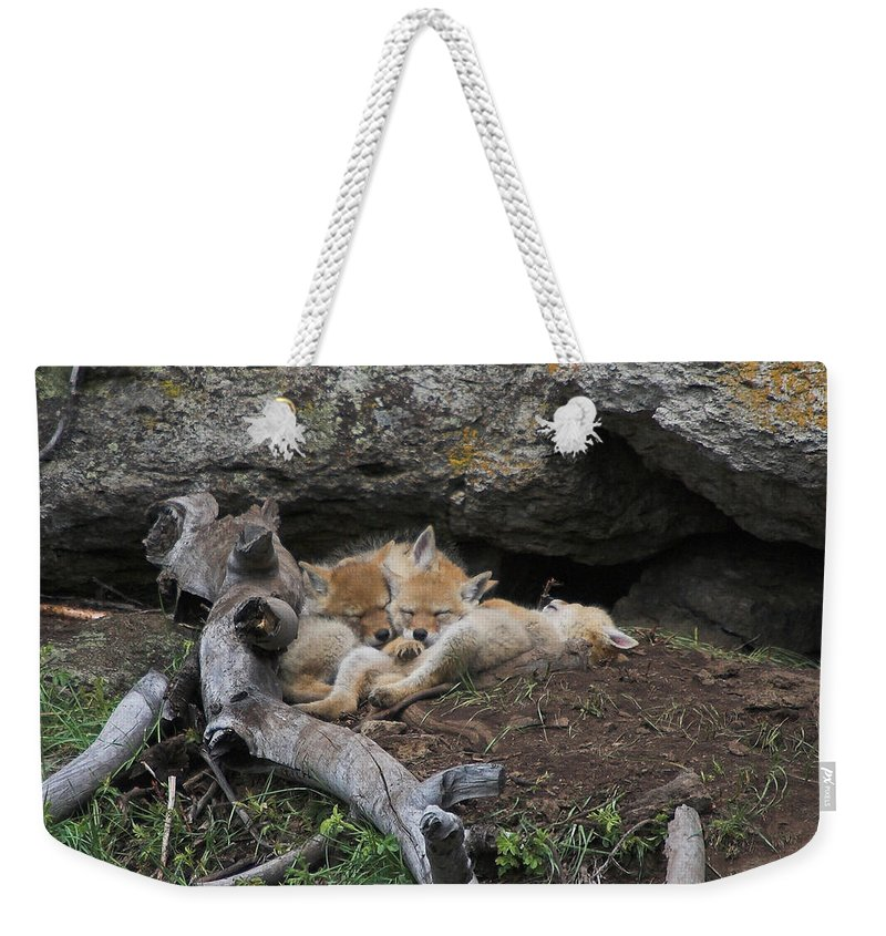 Coyote Weekender Tote Bag featuring the photograph Nap Time by Steve Stuller