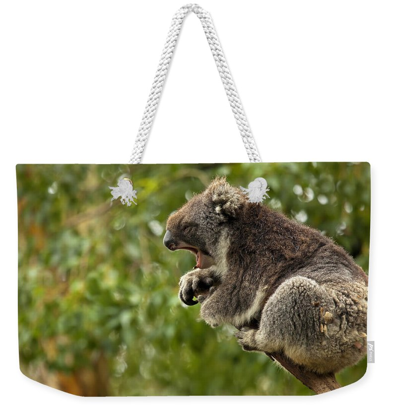 Koala Weekender Tote Bag featuring the photograph Naptime by Mike Dawson