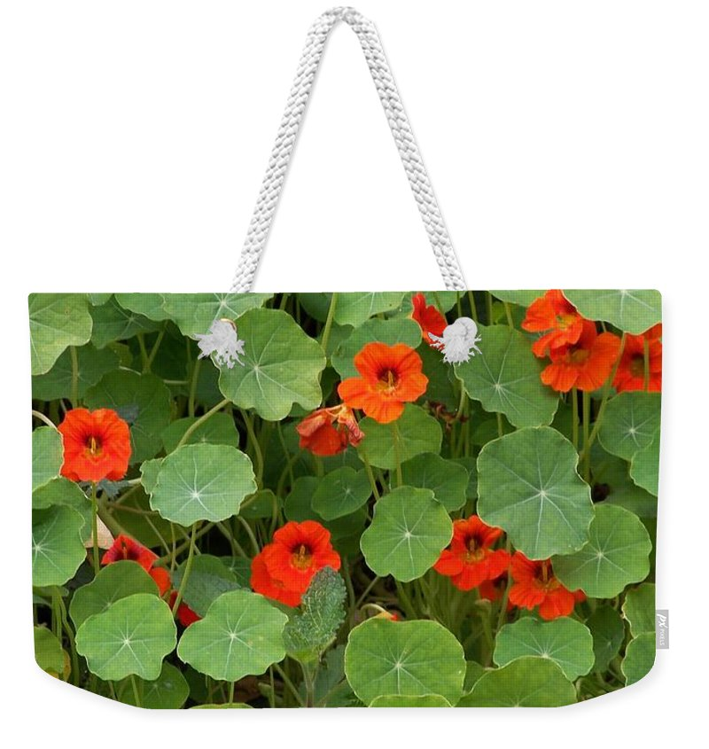 Nasturtiums Weekender Tote Bag featuring the photograph Nasturtiums by Gale Cochran-Smith