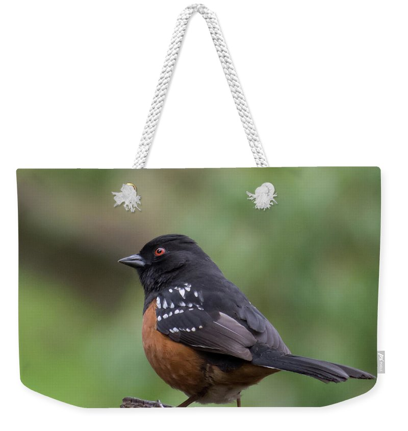 Towhee Weekender Tote Bag featuring the photograph Spotted Towhee by Marilyn Wilson