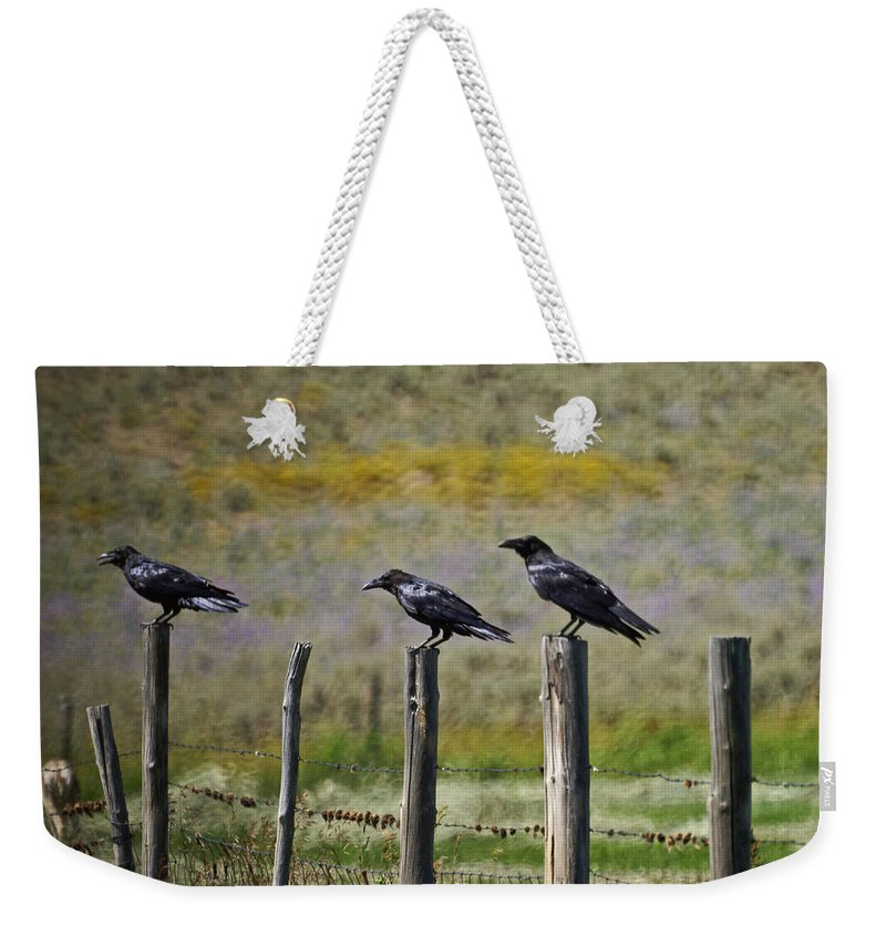 Crows Weekender Tote Bag featuring the photograph Neighborhood Watch Crows by Heather Coen