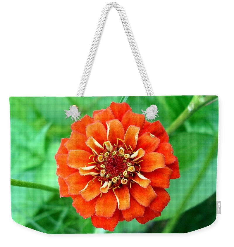 Dahlia Flowers Weekender Tote Bag featuring the photograph Nepal Orange 2 by Nelson F Martinez