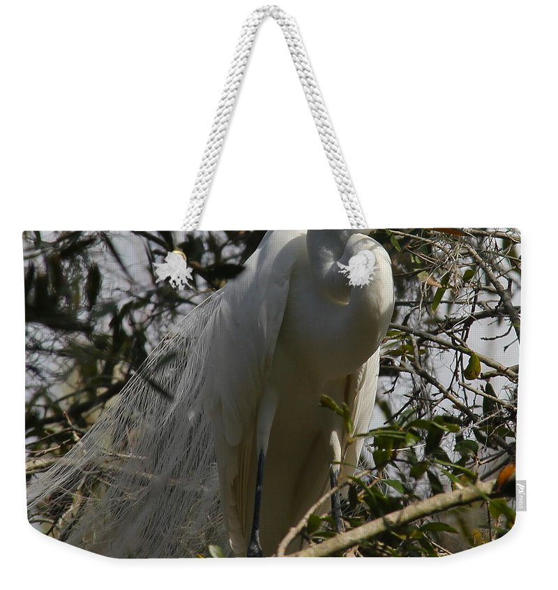 Bird Weekender Tote Bag featuring the photograph Nesting Egret by Denise Mazzocco