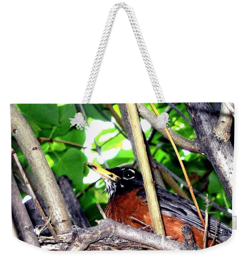 Robin Weekender Tote Bag featuring the photograph Nesting Robin by Will Borden