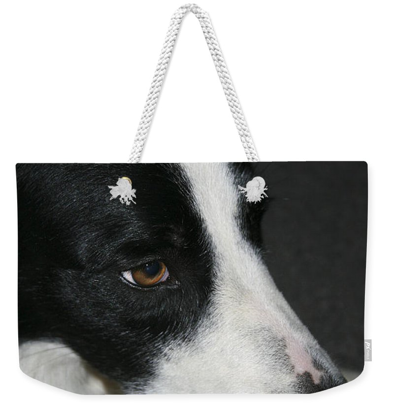 Dog Weekender Tote Bag featuring the photograph New Dog Friend by Deborah Benoit