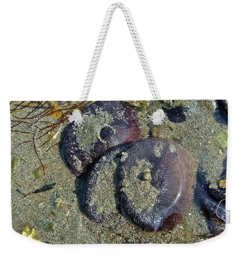 Beach Weekender Tote Bag featuring the photograph New Dollars by Diana Hatcher
