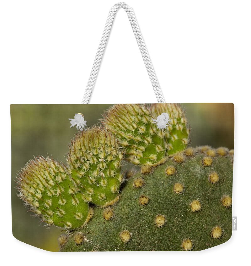 Cactus Weekender Tote Bag featuring the photograph New Growth by Kelley King
