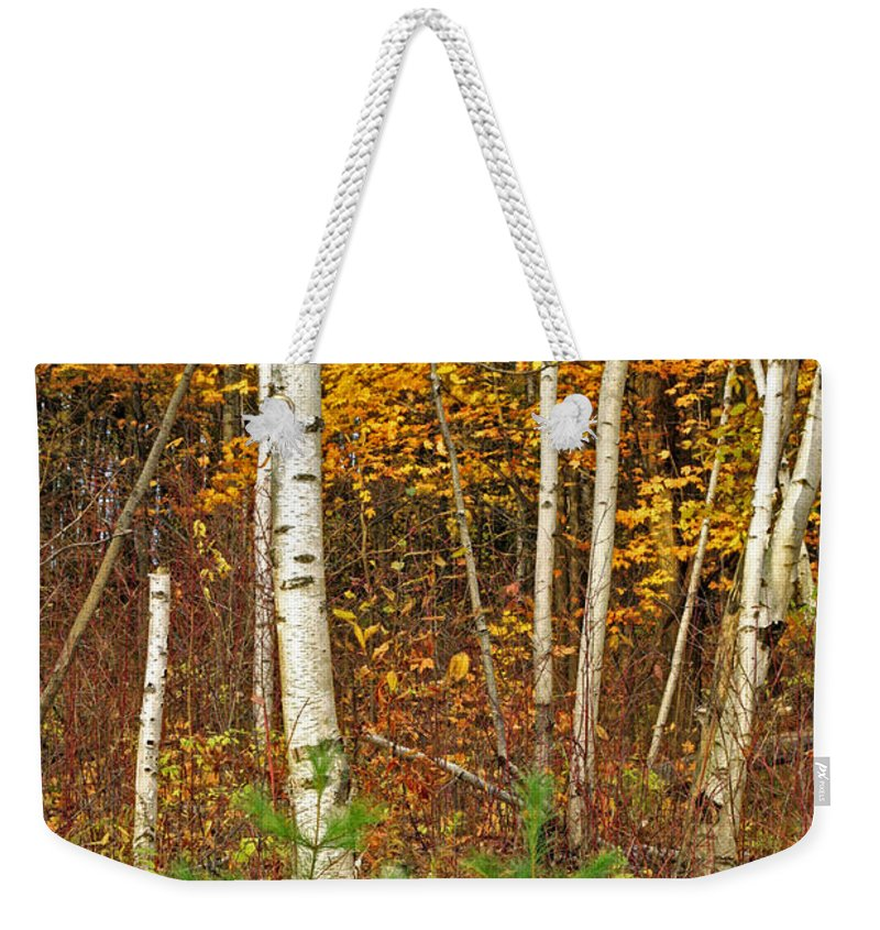 Fine Art Weekender Tote Bag featuring the photograph New Growth Old Leaves by Phill Doherty