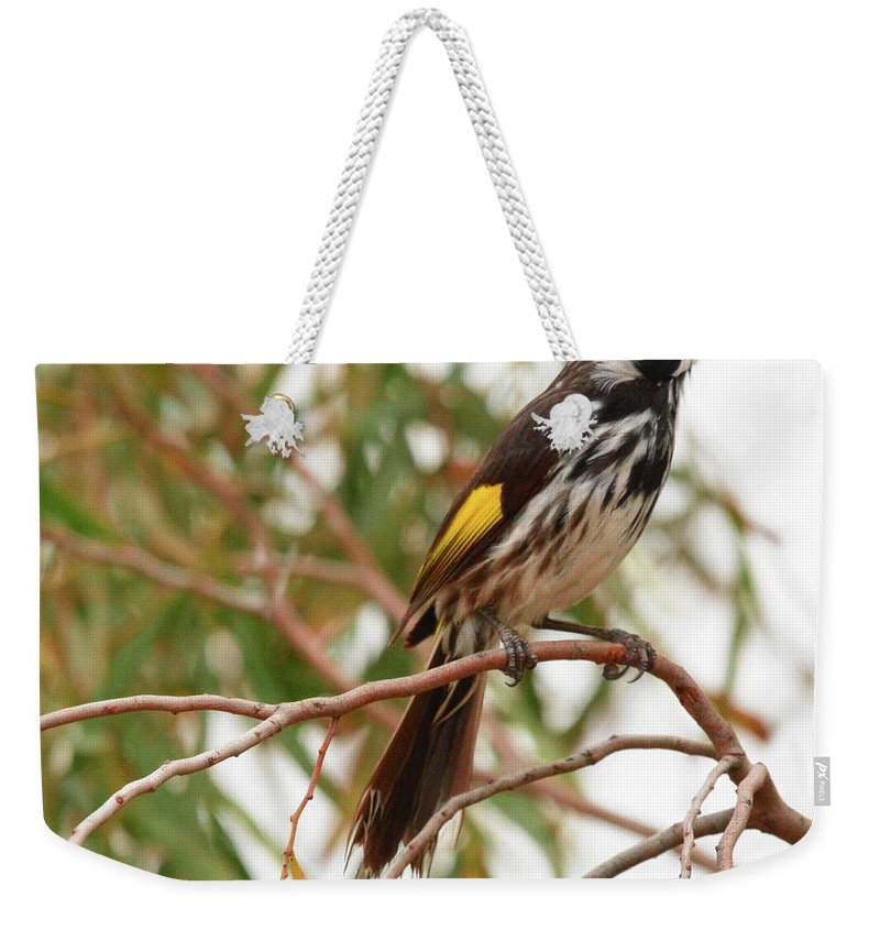 Honey-eater Weekender Tote Bag featuring the photograph New Holland Honey-eater by Peter Krause