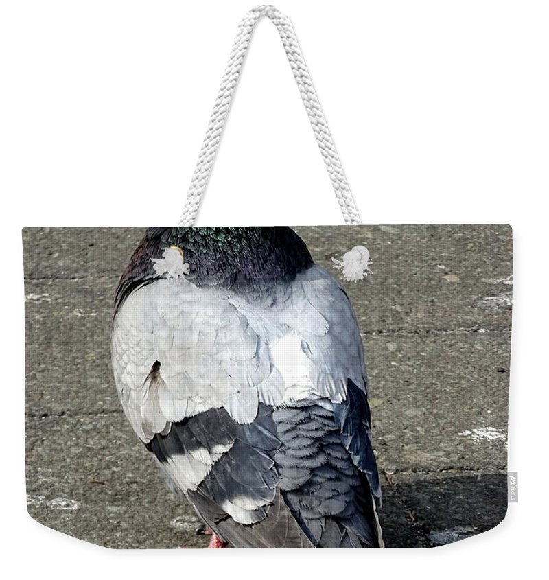 Pigeons Weekender Tote Bag featuring the photograph New York City Pigeons # by Ed Weidman