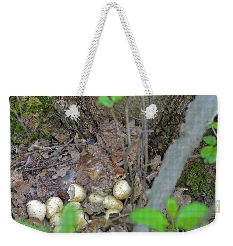 Ruffed Grouse Weekender Tote Bag featuring the photograph Newly Hatched Ruffed Grouse Chicks by Asbed Iskedjian
