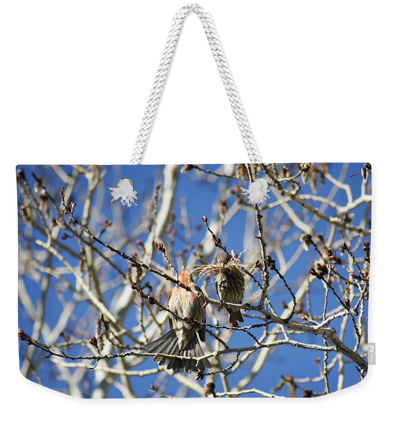 Bird Weekender Tote Bag featuring the photograph Newlyweds by Marilyn Hunt