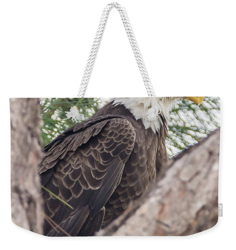 Bald Eagle Weekender Tote Bag featuring the photograph Nice Profile by Samuel Jokich