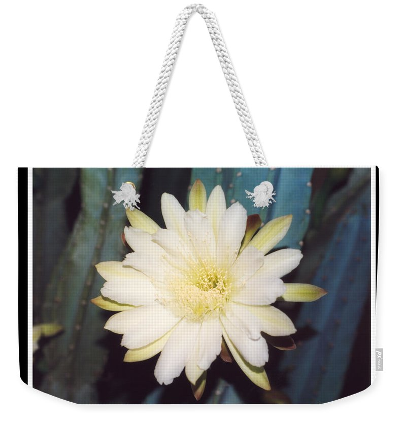 Night Bloomer Cereus Bloom White Green Organ Pipe Weekender Tote Bag featuring the photograph Night Bloomer Posters by Heather Kirk
