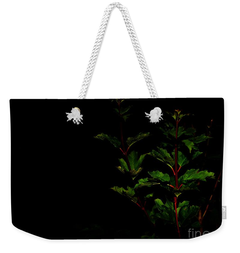 Plant Weekender Tote Bag featuring the photograph Night Garden by Linda Shafer