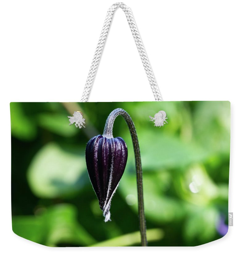 Nodding Weekender Tote Bag featuring the photograph Nodding Clematis by Douglas Barnett