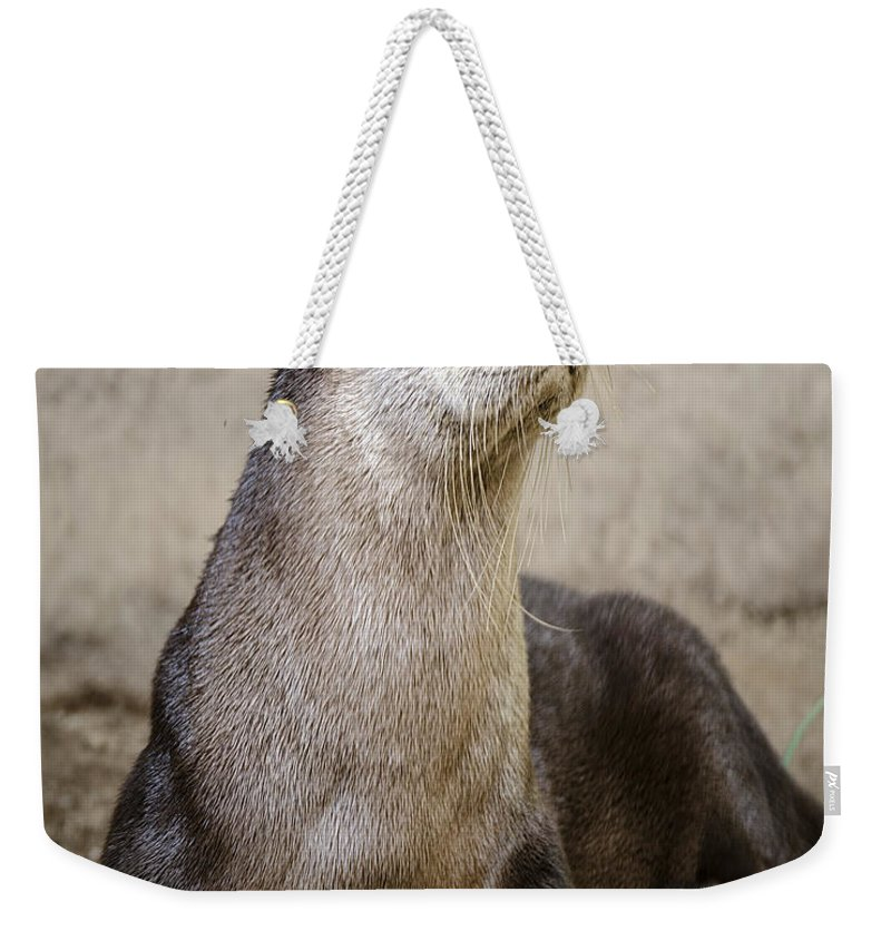 Nature Wear Weekender Tote Bag featuring the photograph North American Otter Nature Girl by LeeAnn McLaneGoetz McLaneGoetzStudioLLCcom