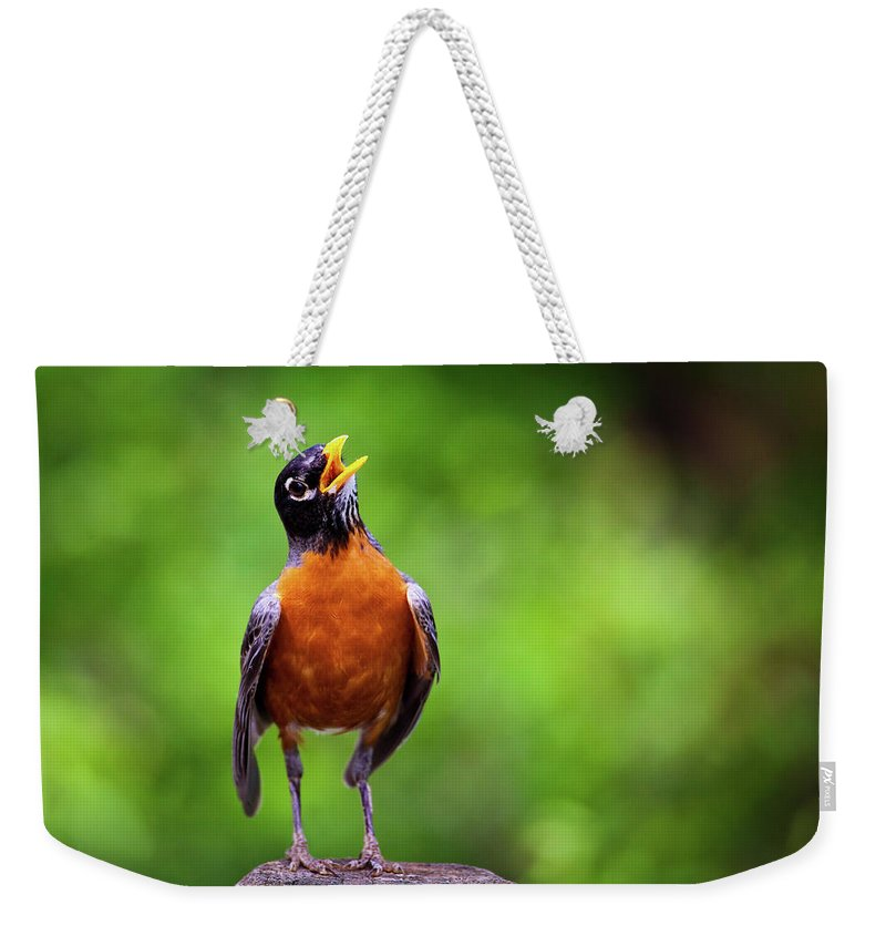 American Robin Weekender Tote Bag featuring the photograph North American Robin In Song by Rick Furmanek