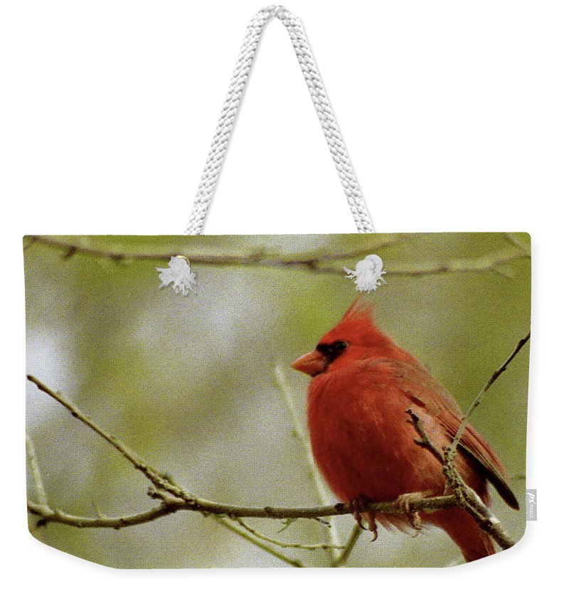 Cardinal Weekender Tote Bag featuring the photograph Northern Cardinal by Michael Peychich
