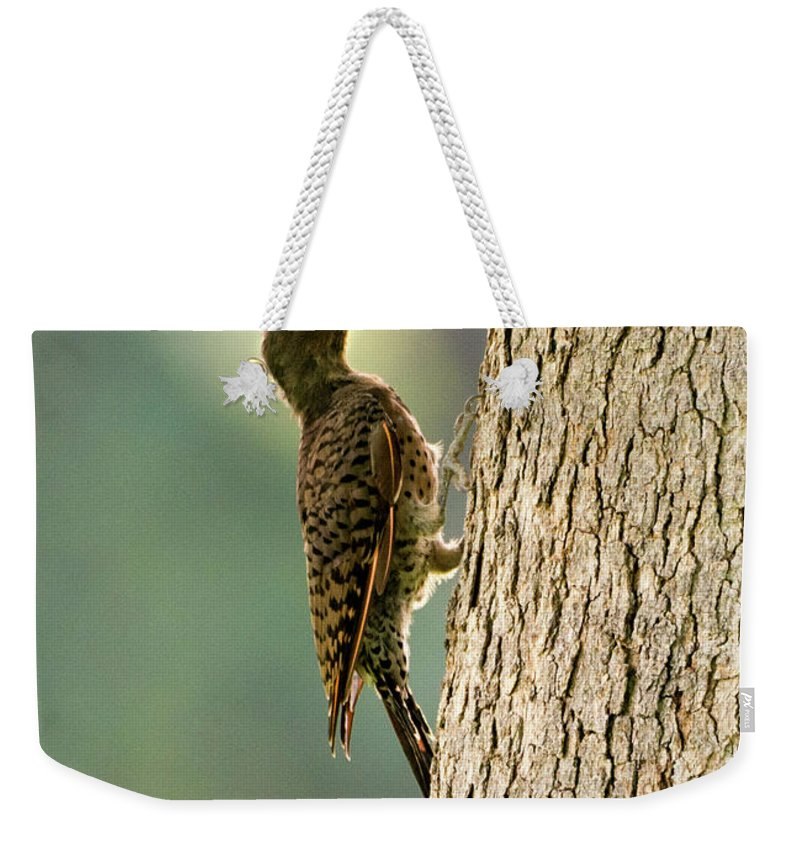 Northern Flicker Weekender Tote Bag featuring the photograph Northern Flicker Halo by Mike Dawson