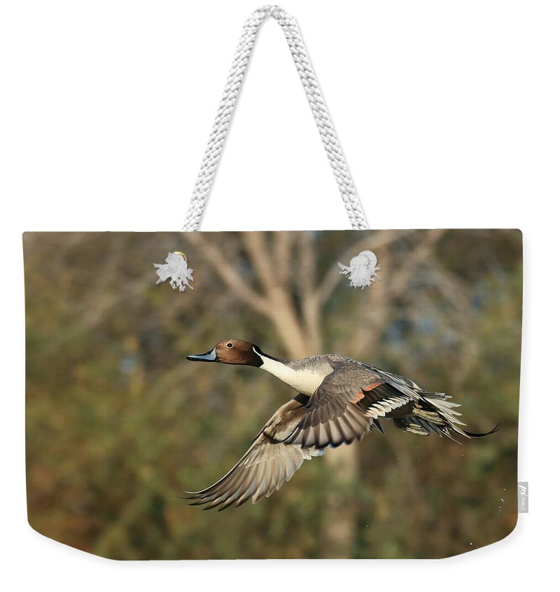 Northern Pintail Weekender Tote Bag featuring the photograph Northern Pintail Tree by Matt Blankenship