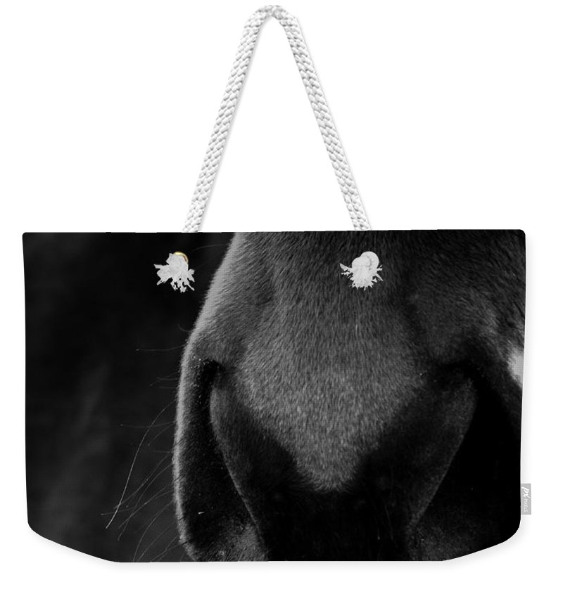 Horse Weekender Tote Bag featuring the photograph Nose Best by Hannah Breidenbach