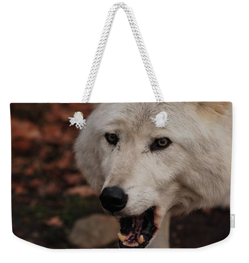 Wolf Weekender Tote Bag featuring the photograph Not A Happy Face by Lori Tambakis