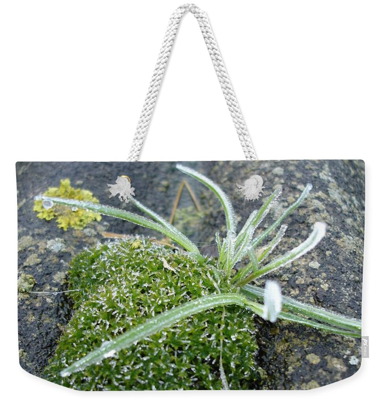 Green Weekender Tote Bag featuring the photograph Not Quite A Roof Garden by Susan Baker
