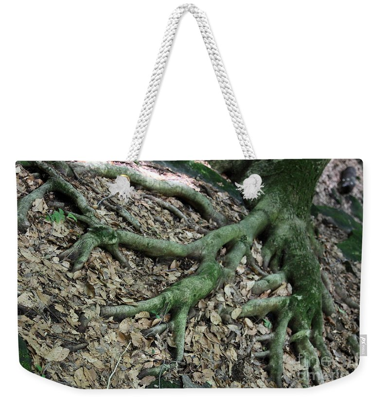 Trees Weekender Tote Bag featuring the photograph Nourishment by Amanda Barcon