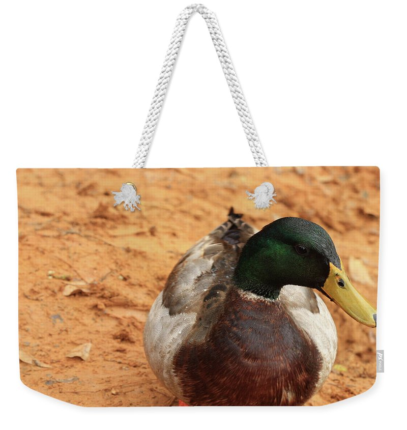 Mallard Photography Weekender Tote Bag featuring the photograph Number 17 by Kim Henderson