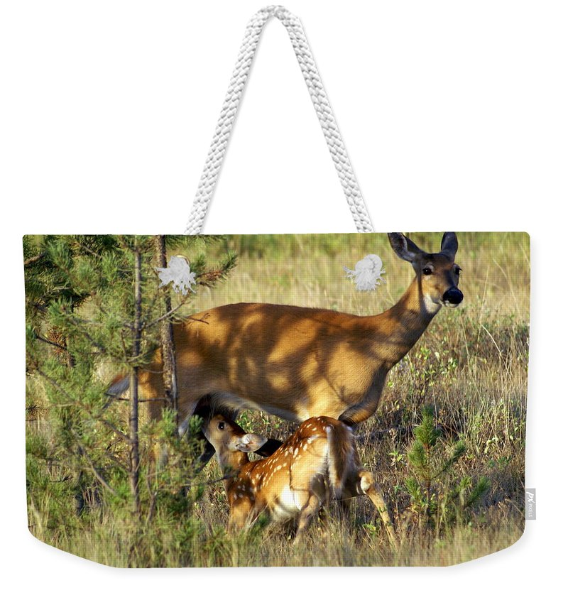 Deer Weekender Tote Bag featuring the photograph Nursing Fawn by Marty Koch